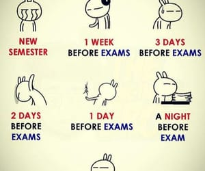 college, exams, and funny image