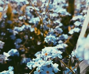 beautiful, flowers, and forget me not image