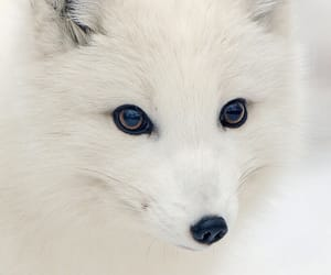 white, animal, and cute image