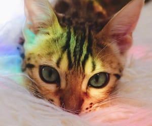 animal, animals, and beautiful image