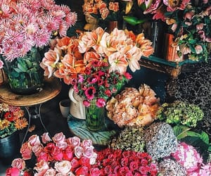 colourful, flowers, and nature image