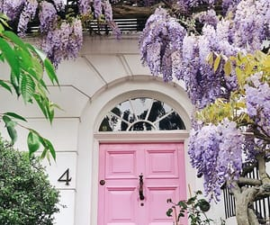 bloom, blossom, and door image