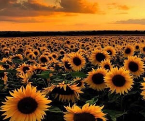 flowers, love time, and sunny evening image
