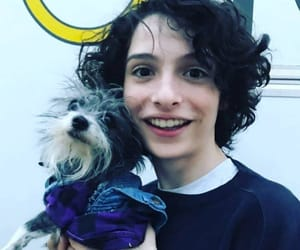 dogs, finn wolfhard, and wolfhard image