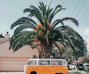 palm trees, summer, and car image
