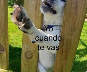 dog, memes, and perritos image
