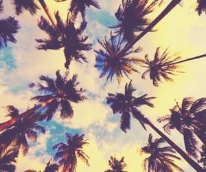 beautiful, palm trees, and sky image