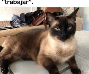cat, gatito, and homework image