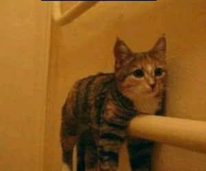 cat, gatito, and lol image