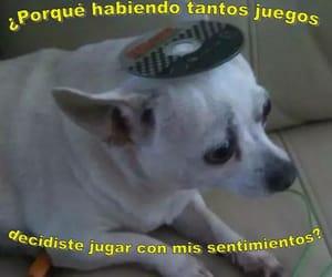 amor, broken heart, and dog image