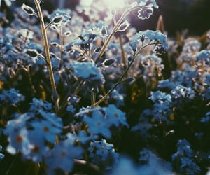 beautiful, flowers, and forget me nots image