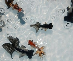fish, aesthetic, and water image