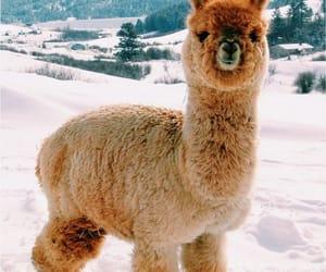 alpaca, animal, and snow image
