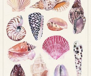 beach, shell, and snails image