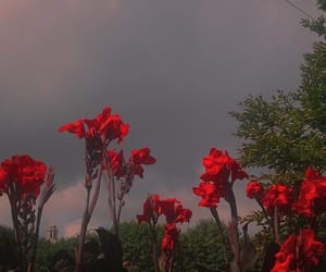 flowers, aesthetic, and red image