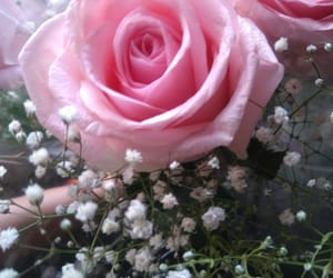 flores, rosas, and 💐 image