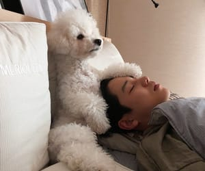 asian, cute, and dog image