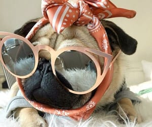 accessories, adorable, and animals image