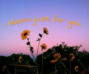 aesthetic, bloom, and dawn image