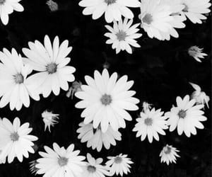flowers, aesthetic, and black and white image