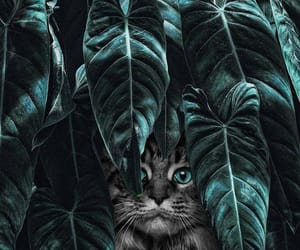 animals, wallpaper, and art image