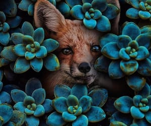 animal, flowers, and fox image
