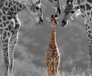 Animales, jirafas, and libertad image