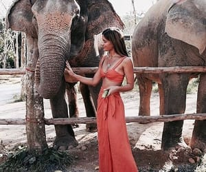 elephant, fashion, and girl image