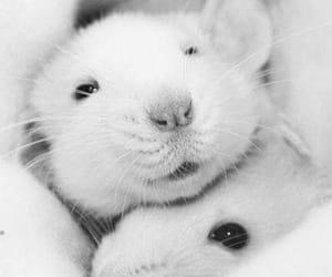 rat and animal image