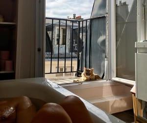 cat, interior, and bath image