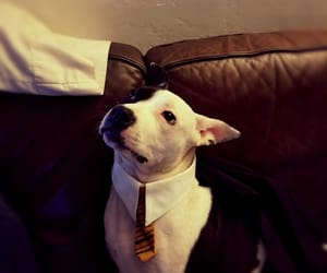 hogwarts, cute, and puppy image