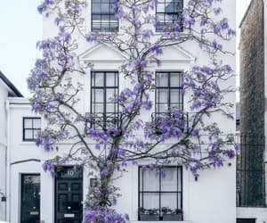 flowers, house, and purple image
