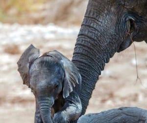 animal, elefant, and happy image