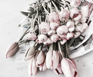 aesthetic, blossom, and chic image