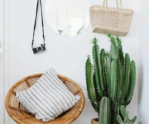 cactus, home, and decor image