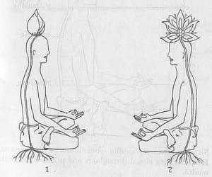 meditation and flowers image