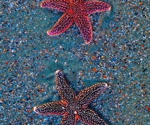 starfish, stars, and beach image