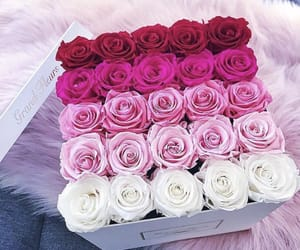 flowers, happy, and rose image