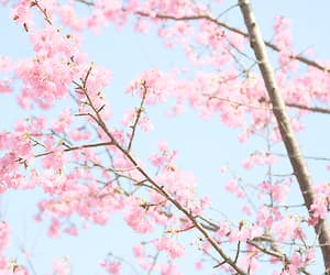 aesthetic, sakura, and pastel photography image