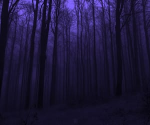 aesthetic, Darkness, and forest image