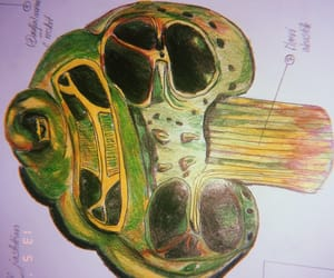 biology, ear, and life image