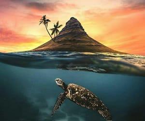 amazing, sunset, and animal image