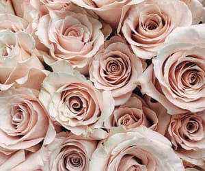 rose, aesthetic, and bouquet image