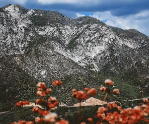 gif, mountains, and flowers image