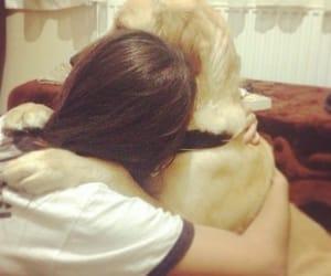 dog, dogs, and goldenretriever image