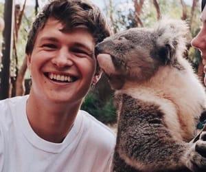 boy, Koala, and ansel elgort image