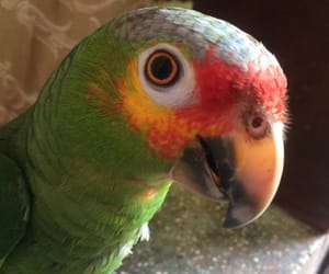 beautiful, parrot, and silvestre image
