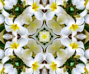 background, kaleidoscope, and plumeria image