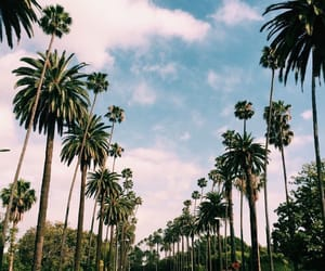sky, los angeles, and palm trees image