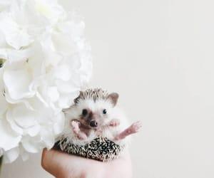 animal, hedgehog, and white image